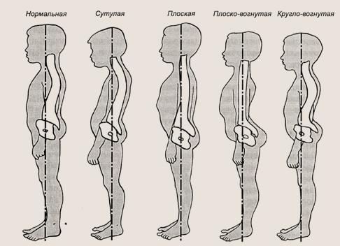 krasivaya-forma-chlena